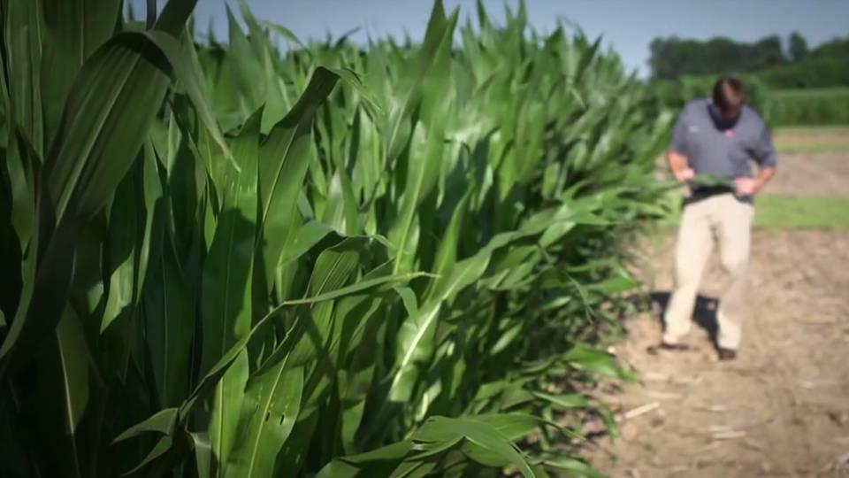H14 farmers sick crops