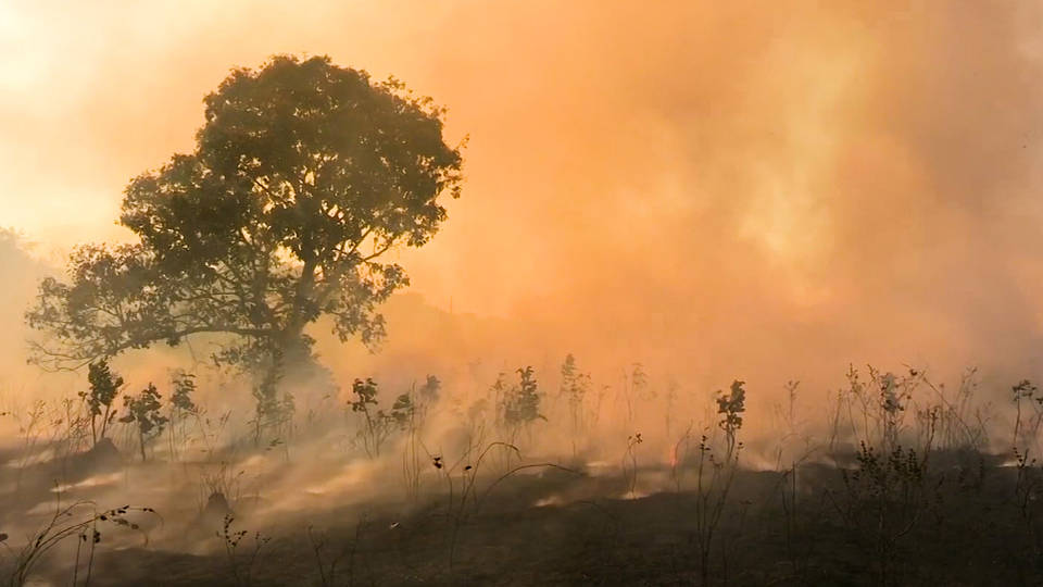 H10 tropical rainforests pace become net carbon emitters