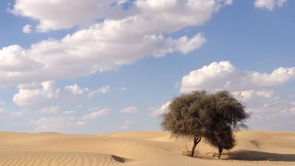 H5 india drought