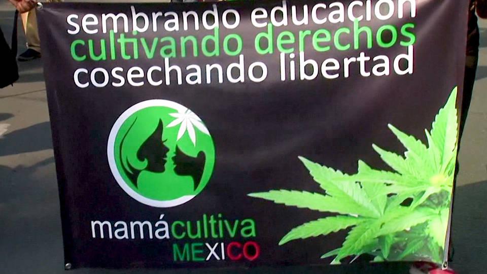 H8 mexico senate vote legal marajuana amlo drug war senator ricardo monreal
