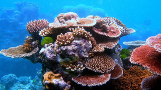 Hdlns3 greatbarrierreef