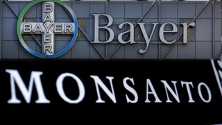 H14 bayer monsanto