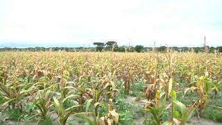 H8 zimbabwe un starving drought food shortages