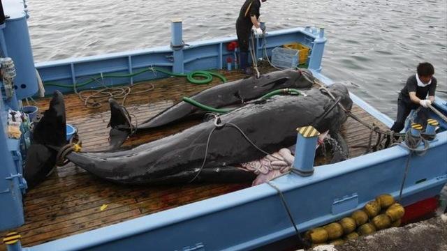 H14 japan whaling