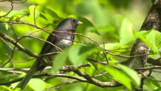 H4 bird population us canada study environment ecosystems