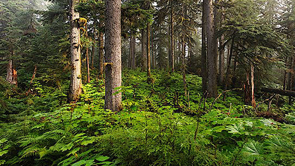 H2 logging tongass national forest alaska