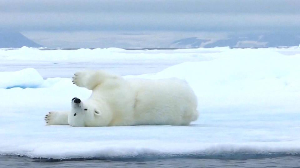 H2 species extinction risk un report