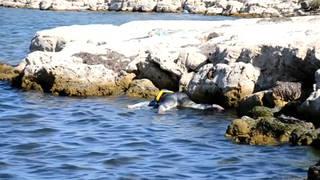 H7 tunisia migrant shipwreck bodies recovered