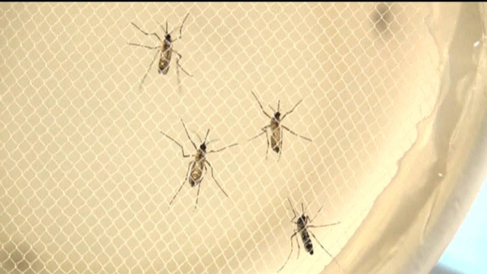 Hdls1 zika