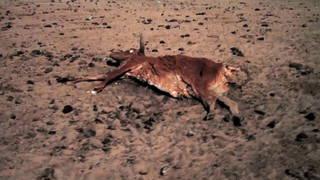 h03 climate change war world hunger