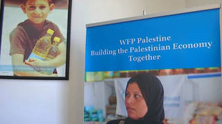 H11 wfp palestine