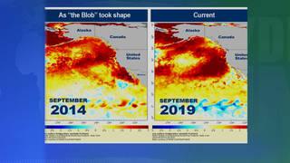 H7 pacific ocean warming 5 degrees fahrenheit the blob 2019 2014