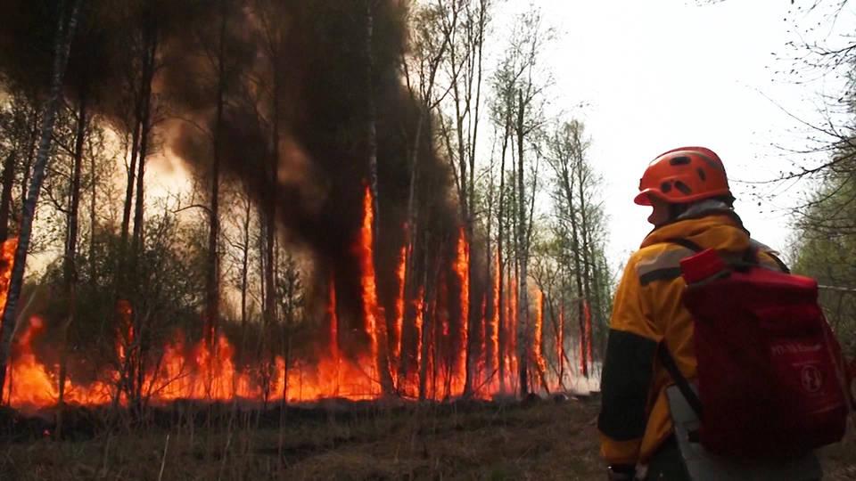 Incendios forestales dejan  muertos en Argelia,