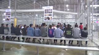 H5 ice quarantines migrants mumps outbreak