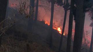 H5 bolivia rain amazon fires climate morales
