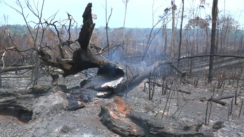 H4 amazon wildfired brazil bolsonaro rainforest fires bolivia morales aid sao paulo