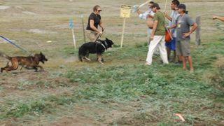 Standingrock dogs2