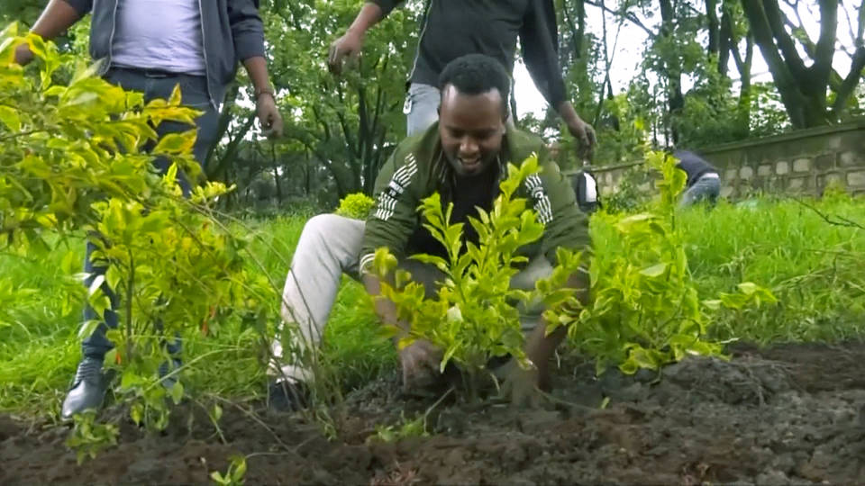 H15 ethiopia plants 350 million trees climate crisis