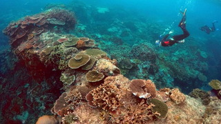 H12 great barrier reef