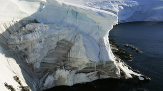 H07 antarctica