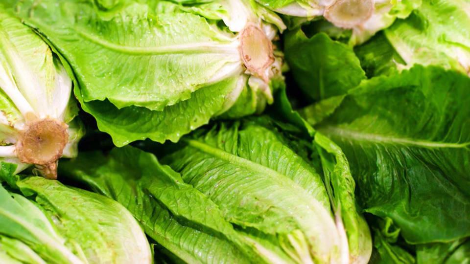 H14 romaine lettuce ecoli