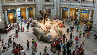 Smithsonian national museum natural history