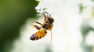 Seg3 pollinators 4