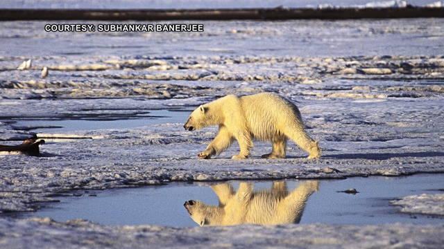 s2 arctic national wildlife refuge