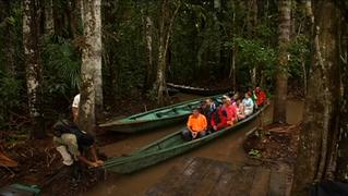1209 seg03 amazon rainforest2