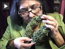 Cannabis cafe web