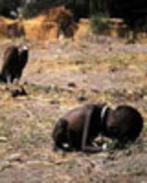 Vulture6 11