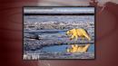 2012-0720_polar_bear