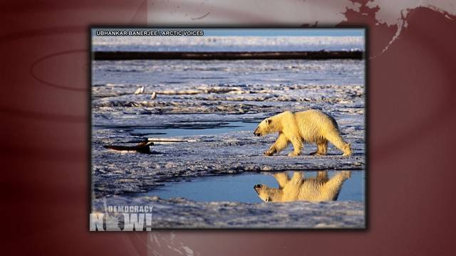 2012 0720 polar bear