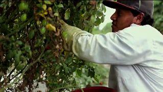 2014 1121 seg3 farmworkers 4