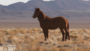 All the Missing Horses: Federal Gov't Selling Wild Horses to Western Dealer Linked to Slaughter