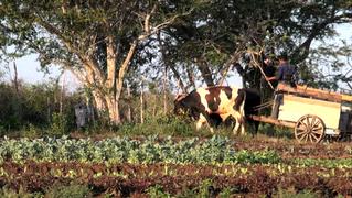 Cuba organic farming agriculture food 2