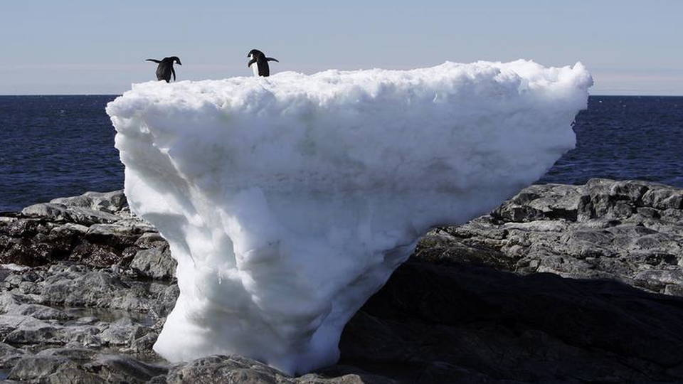 S2 penguins on ice climate change