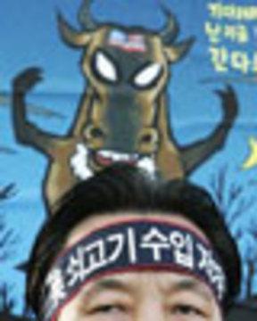 Koreacow web