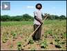 The Right to Food: Corporate, Foreign Gov't Land Grab Causing Hunger in Poor Countries
