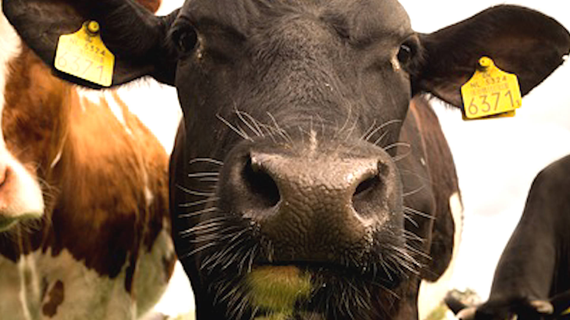 George Monbiot: Ending Meat & Dairy Consumption Is Needed to Prevent Worst Impacts of Climate Change