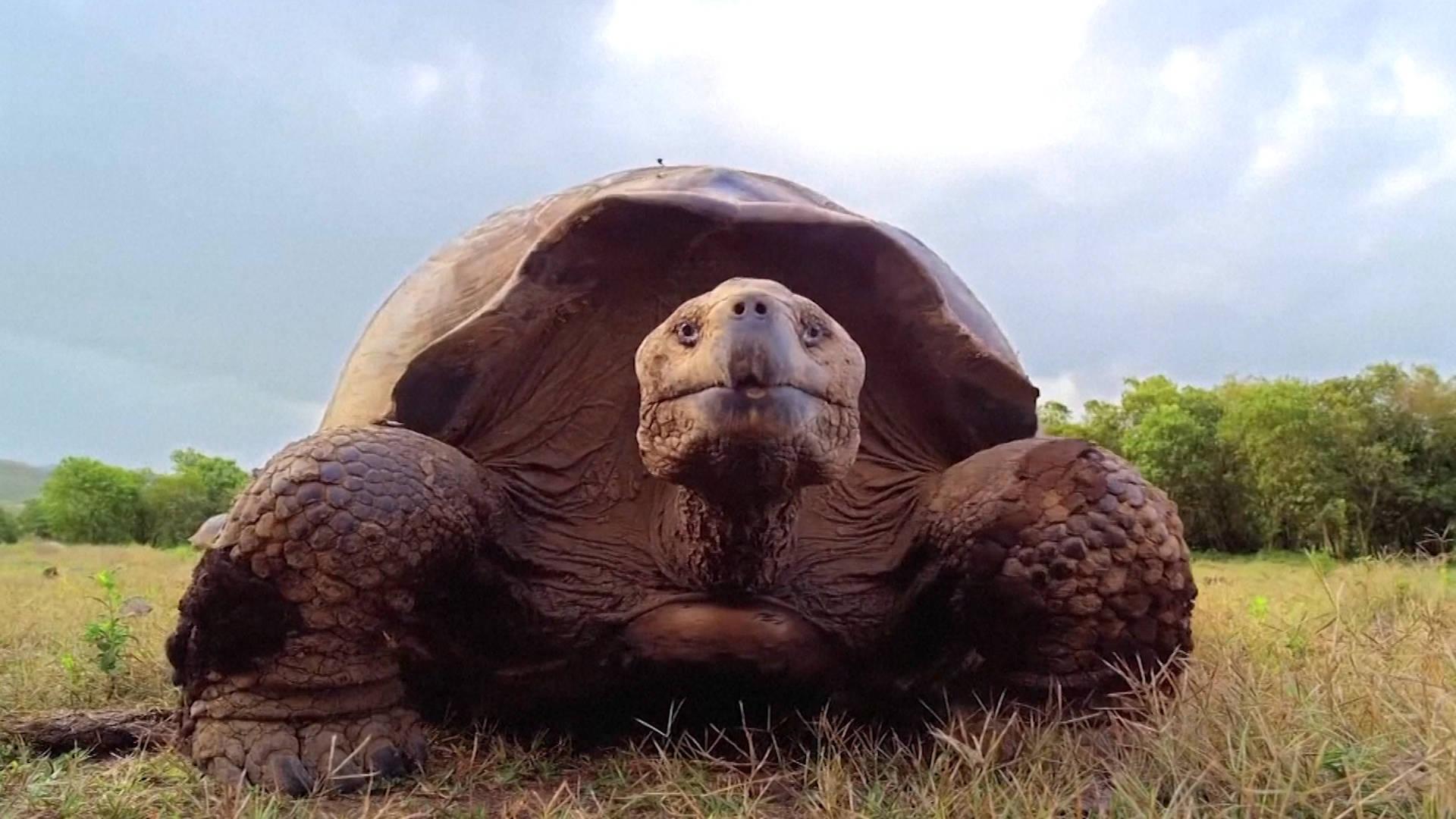 Гифка черепахи, днем рождения лет