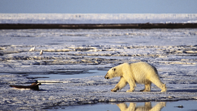 Arctic sea ice drilling shell 2