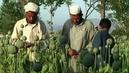 1229_seg3_afghan-poppies2