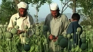 1229_seg3_afghan-poppies2